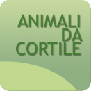 agriumbria-animali-da-cortile